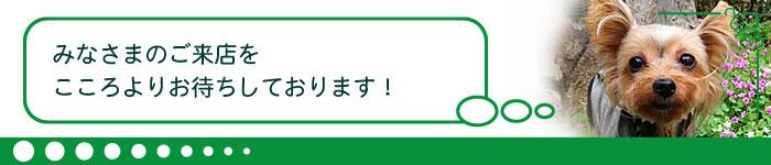 header_ban-01